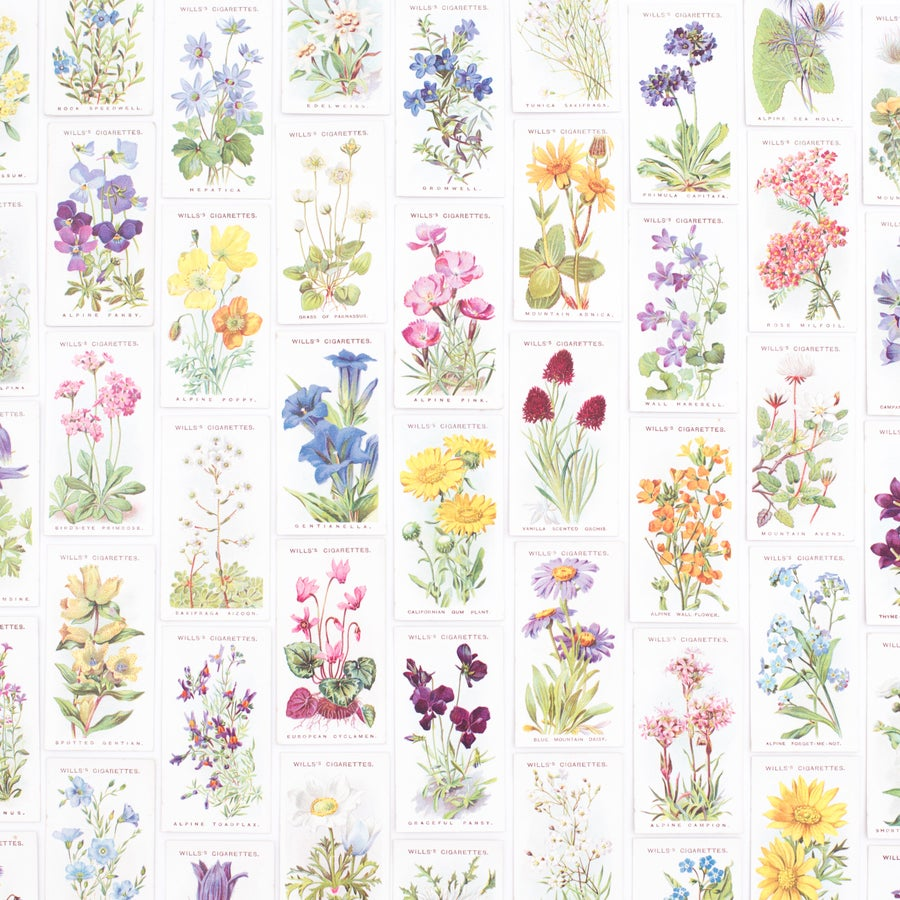 Image of Alpine Flowers Cigarette Cards - Set of 8