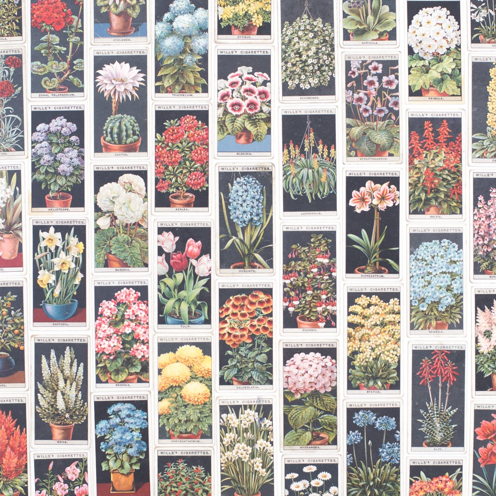Image of Flower Culture in Pots Cigarette Cards - Set of 8