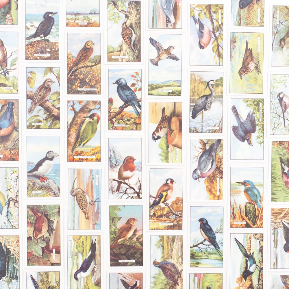 Image of British Birds Cigarette Cards - Set of 8