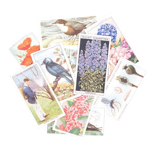 Image of Garden Cigarette Card Variety Pack - Set of 10
