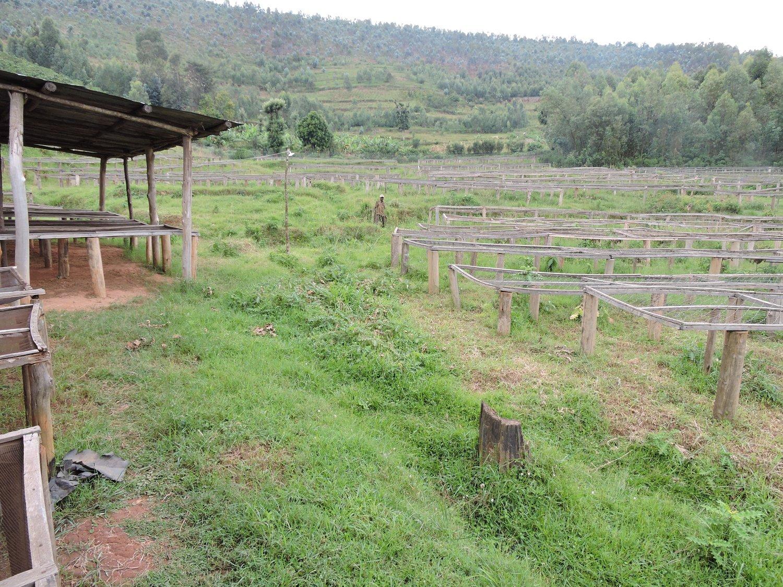 Image of Rwanda, Huye, Shanga, Natural