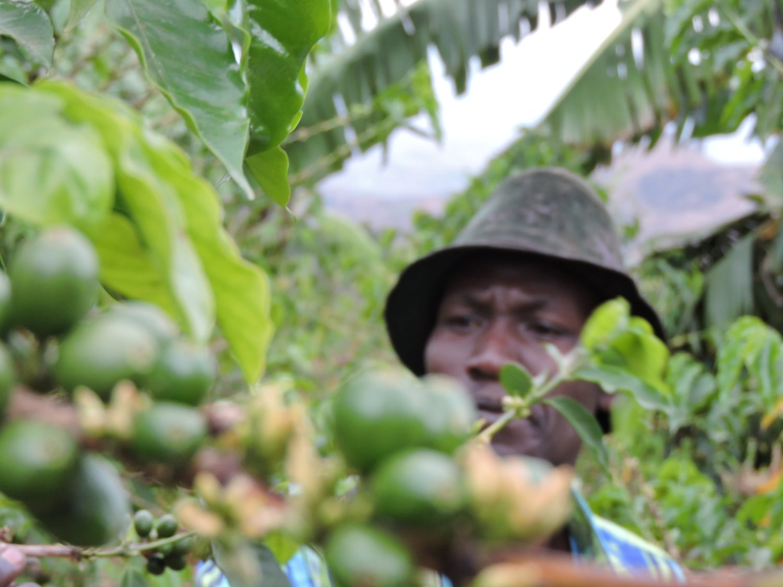 Image of Rwanda, Huye, Shanga, Washed
