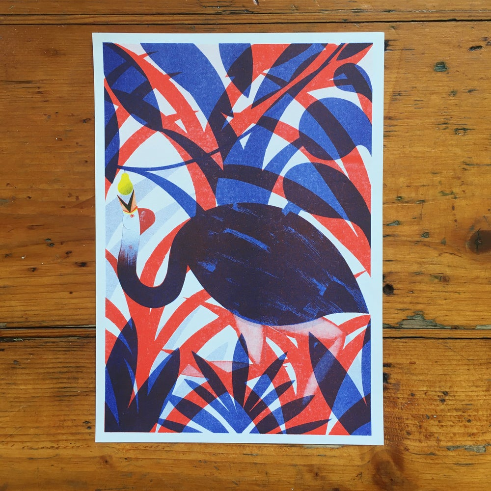 Image of Southern Cassowary