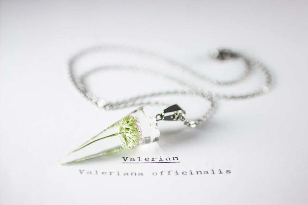 Image of Valerian (Valeriana officinalis) - Conical Pendant #2