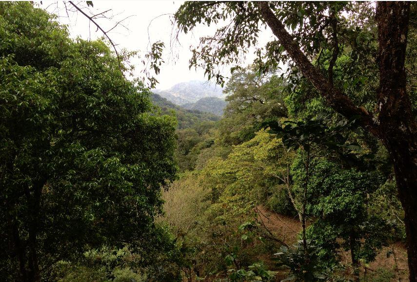 Image of - MEXICO - CHIAPAS SIERRA AZUL [Certified Organic, Fair Trade]