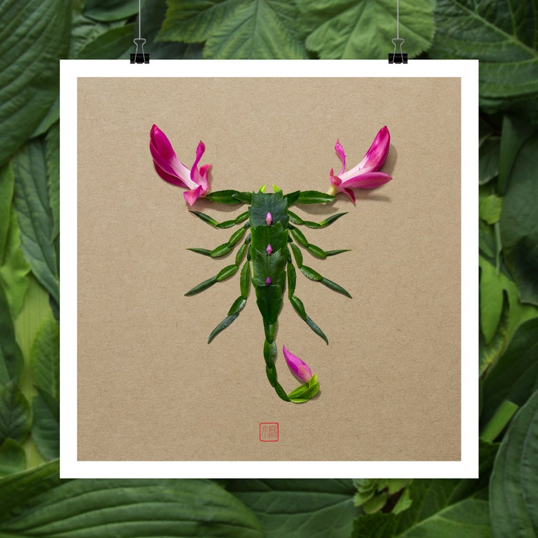 Image of Natura Insects Series 8 -Puebla,  Mexico-