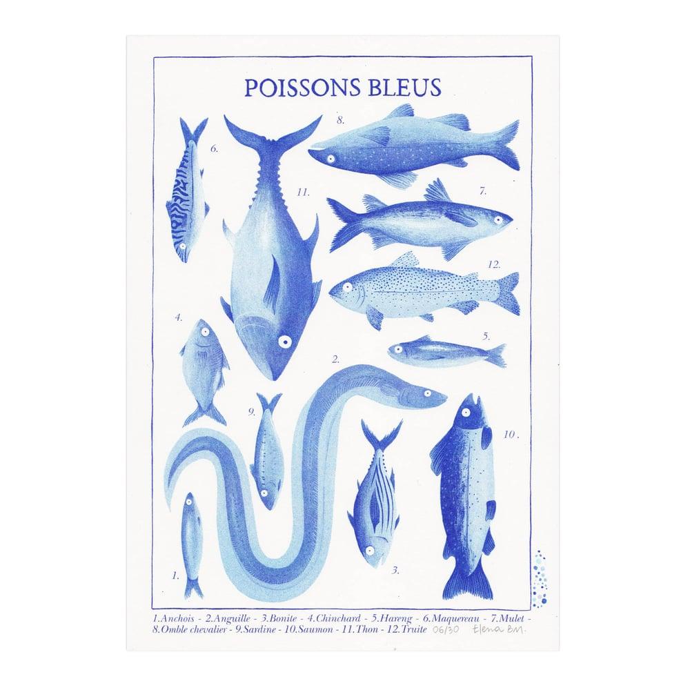 Image of Poissons bleus