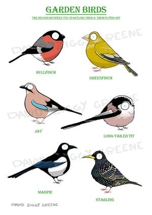 Garden Birds 2 print