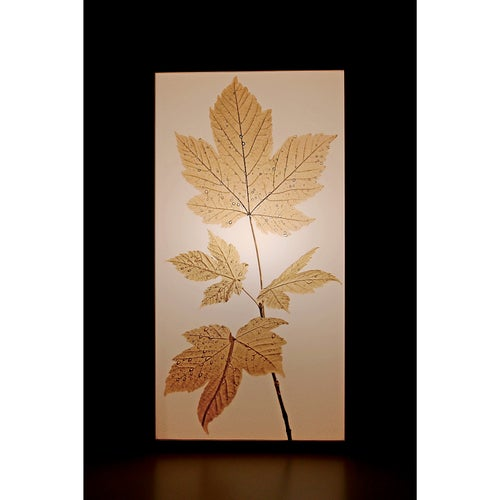 "Image of Leuchte I Lamp  ""AUTUMN 01"""