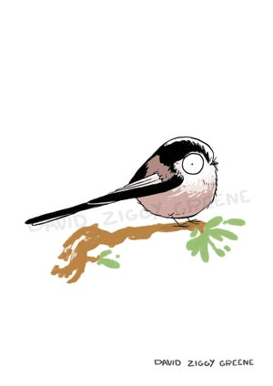 Garden Birds individual prints