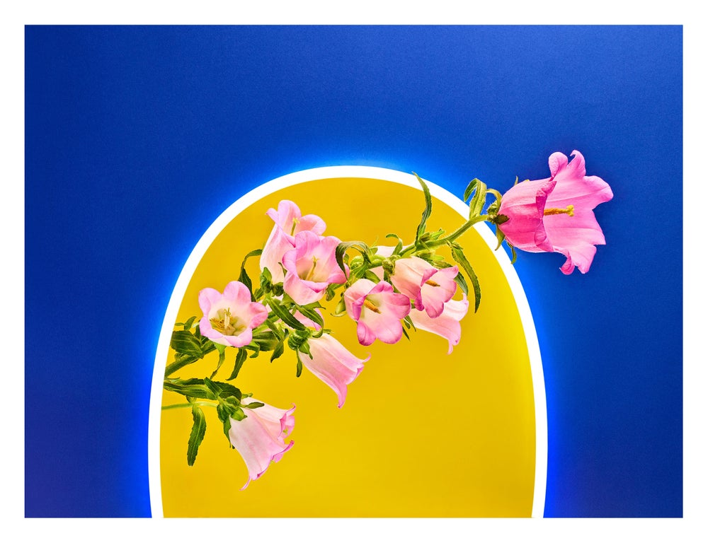 Image of Neon Spring_05