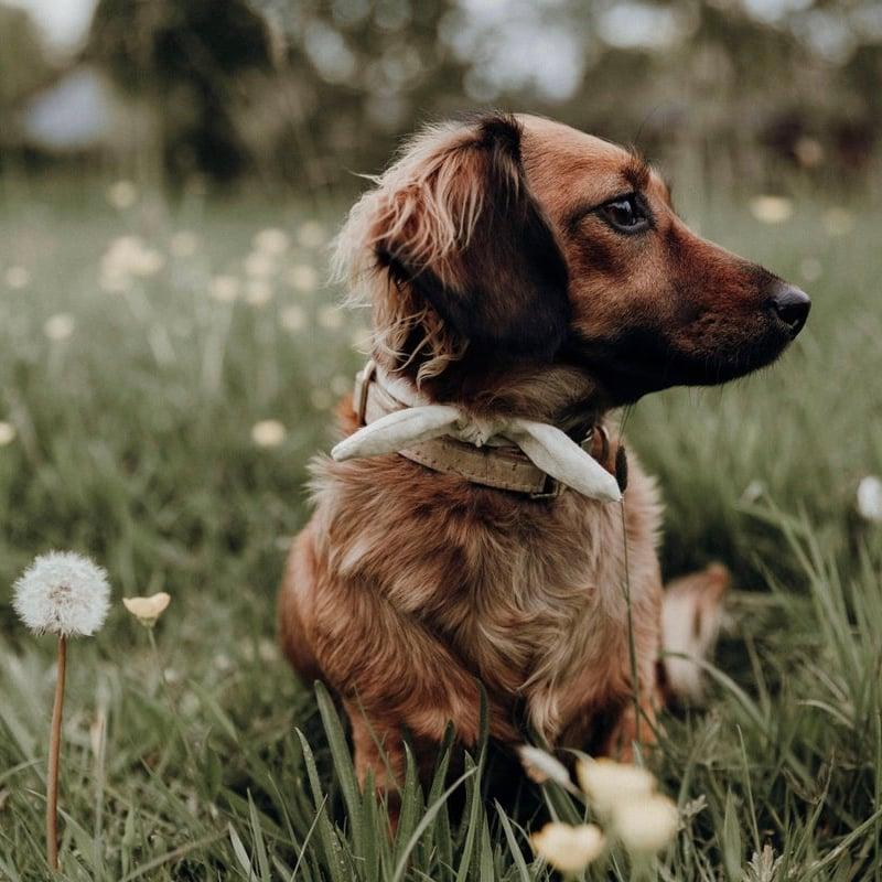 Image of Cream houndstooth