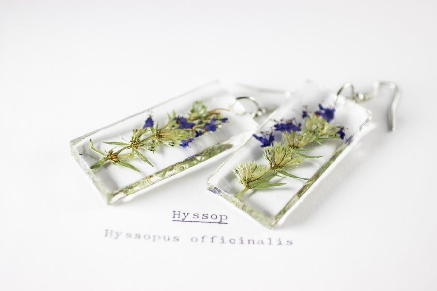 Image of Hyssop (Hyssopus officinalis) - Pressed Earrings #1