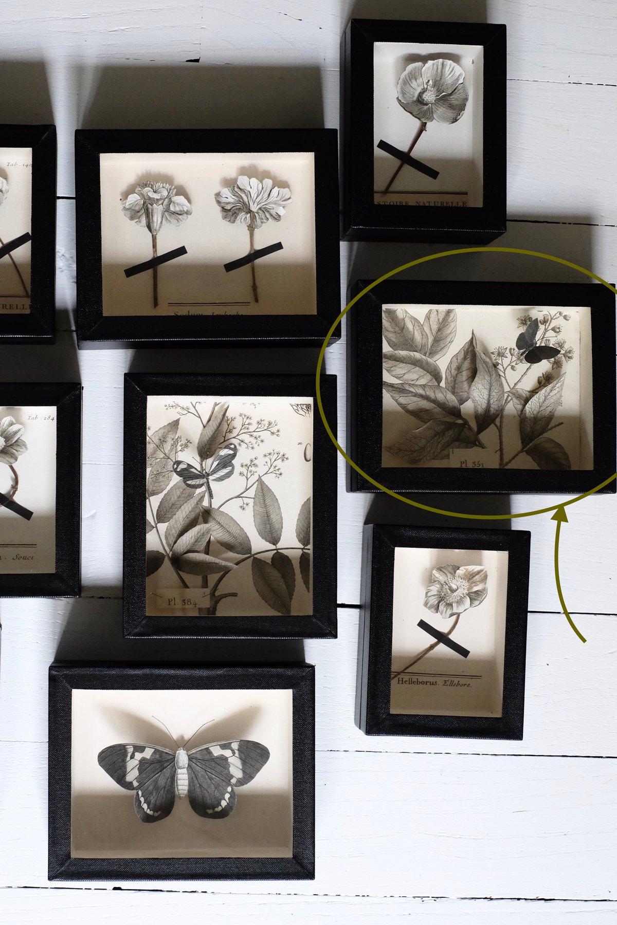 Image of Papillon volant dans sa boite vitrée - Pl 351