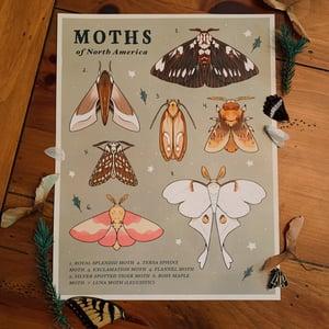 Moths of North America Print