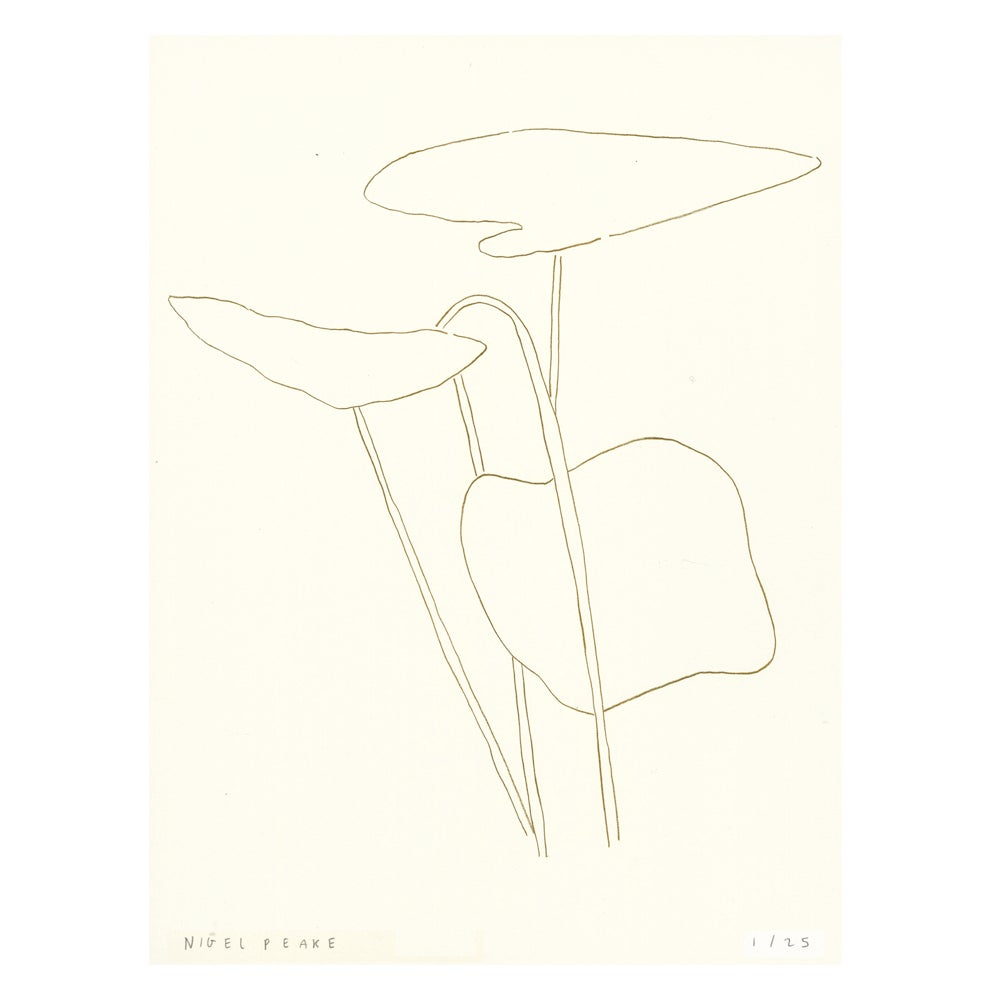 Image of Plant iii