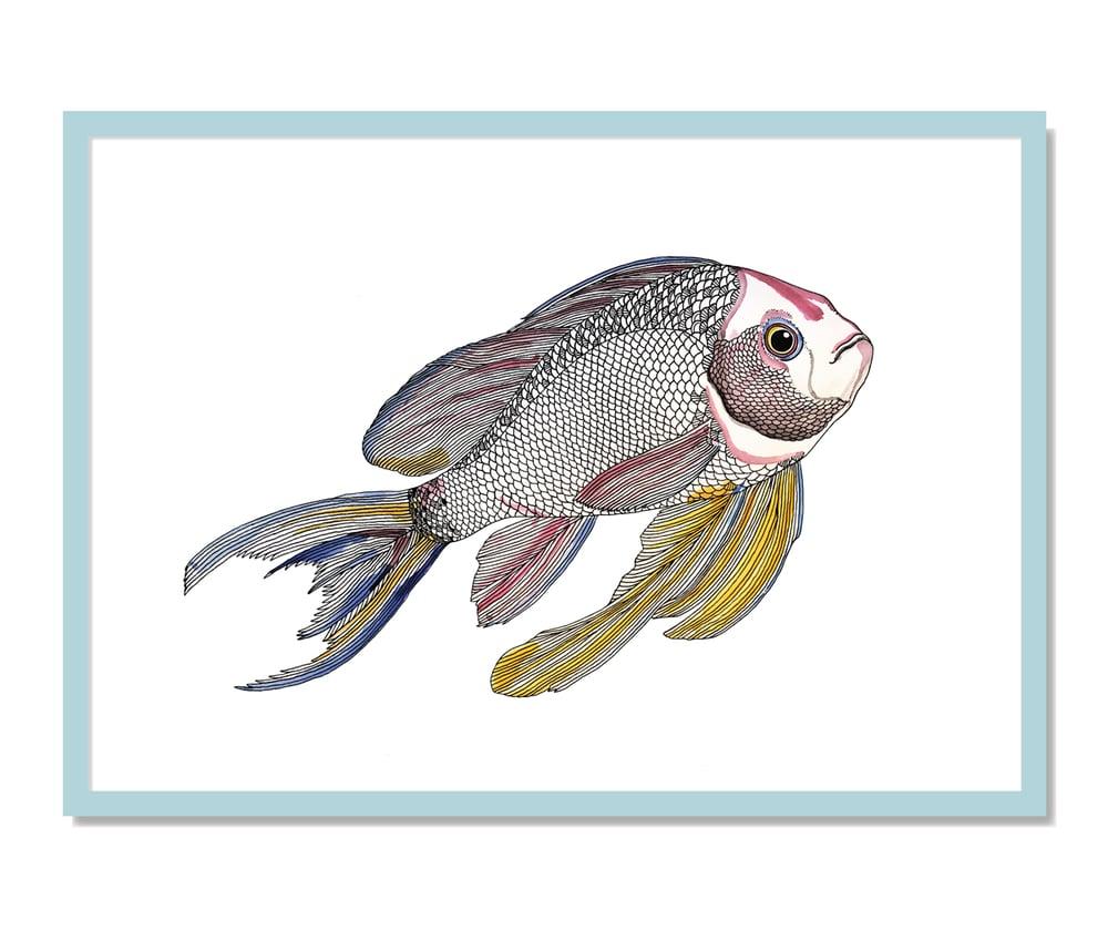 Image of Print: Paradiesfisch