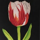 Image 1 of Pats' Tulip