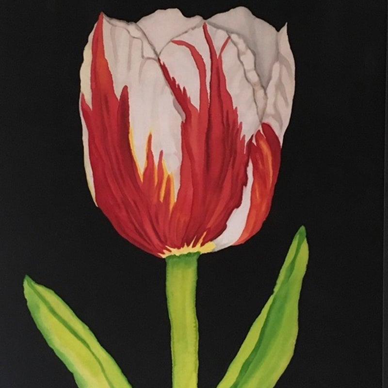 Image of Pats' Tulip