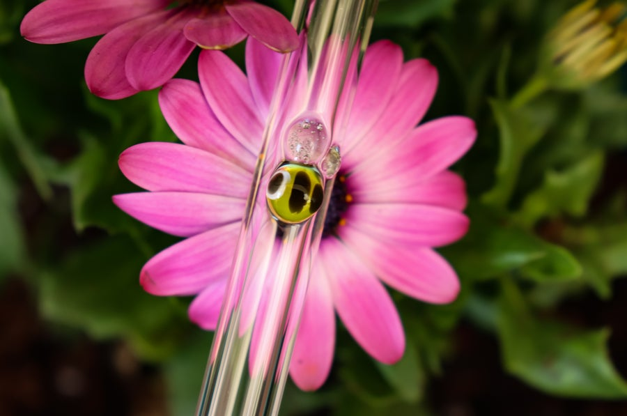 Image of Bee Glass Drinking Straws