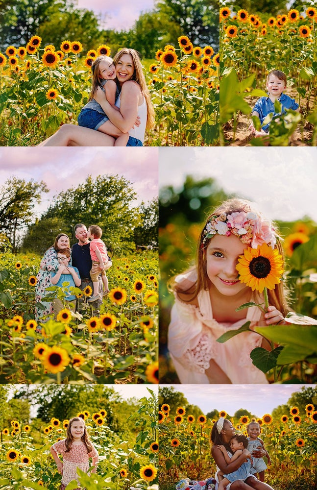 Image of Sunflower Mini Sessions