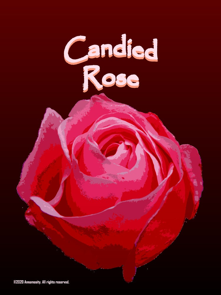 Image of Candied Rose - Lotion Bar