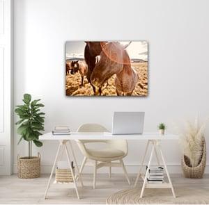 Image of Iceland Horses