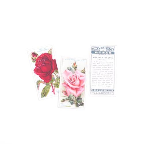 Image of Roses Cigarette Cards - Set of 8