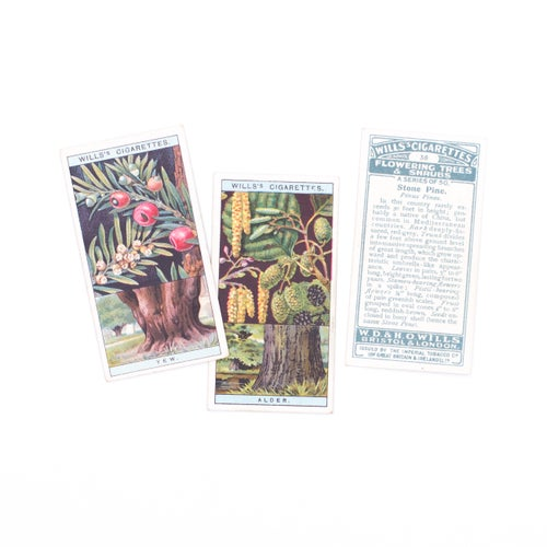 Image of Flowering Trees & Shrubs Cigarette Cards - Set of 8 or Complete Set