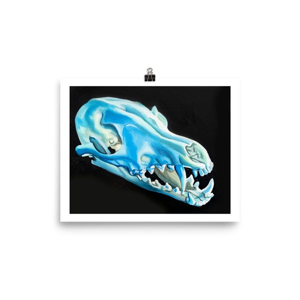Image of Blue Fox Skull