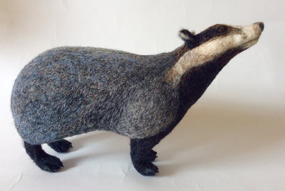 Image of Curious Badger