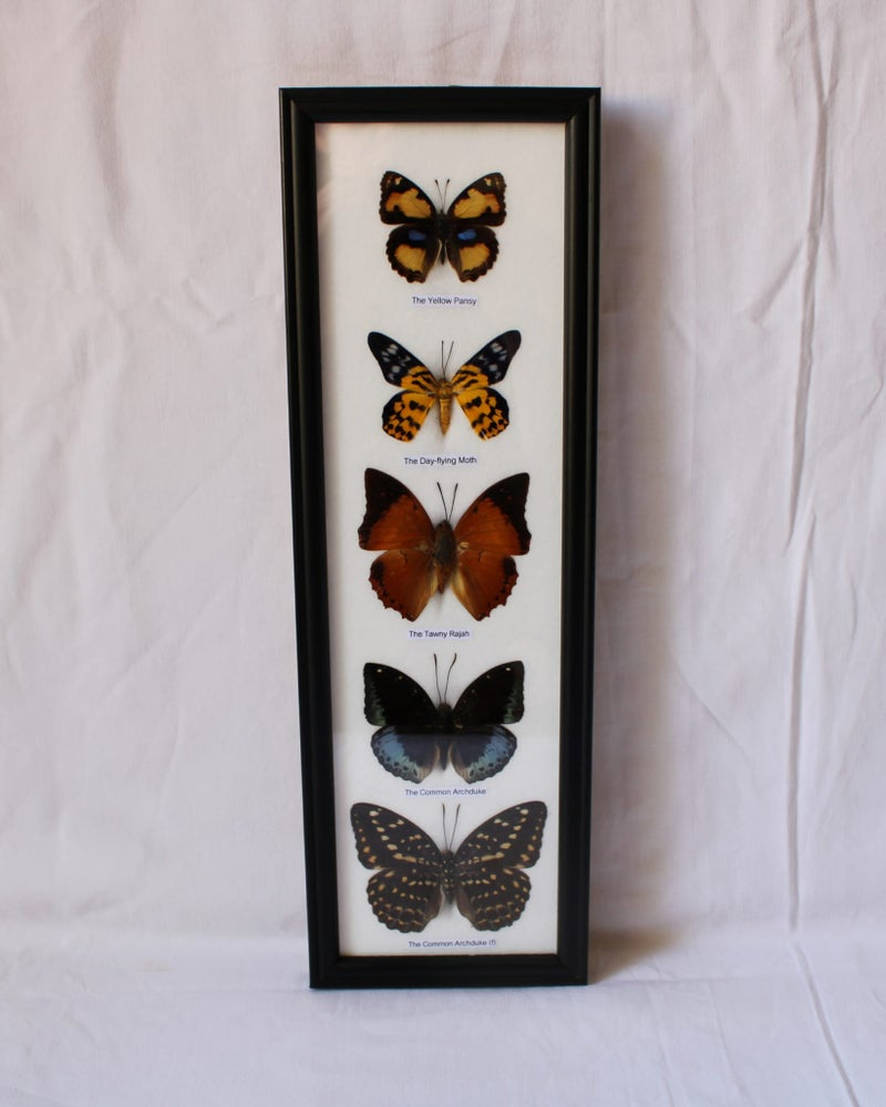 Image of 5 mariposas