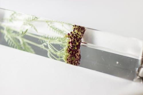 Image of Red Yarrow (Achillea millefolium) - Suncatcher Prism