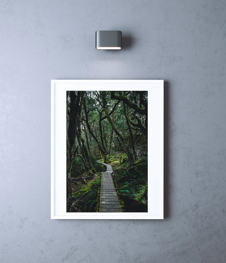 Image of Magic Forest