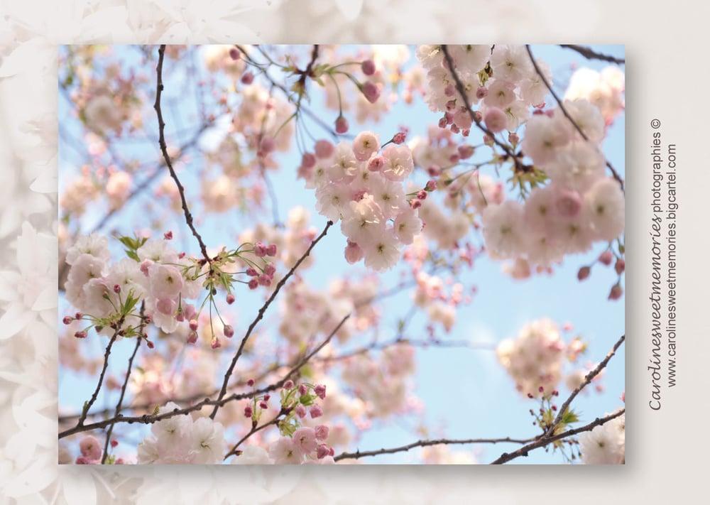 Image of Les cerisiers (3) | carte postale