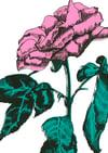 Rose & Gin