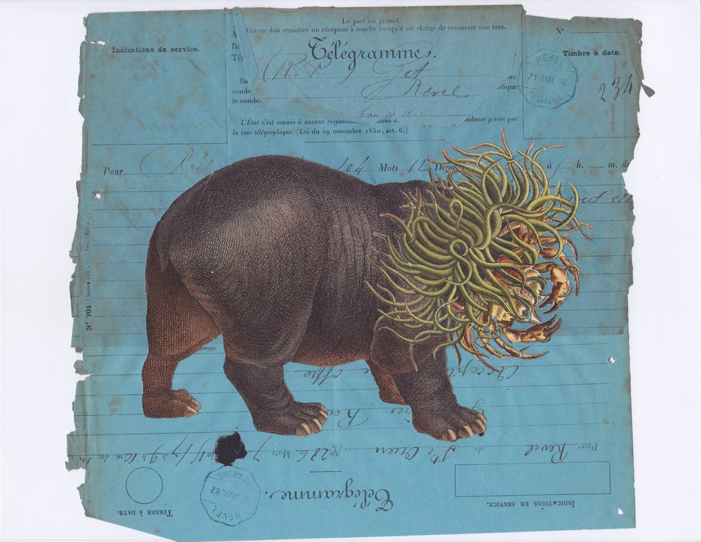 Image of The Hippopotamus Dreams of Hair