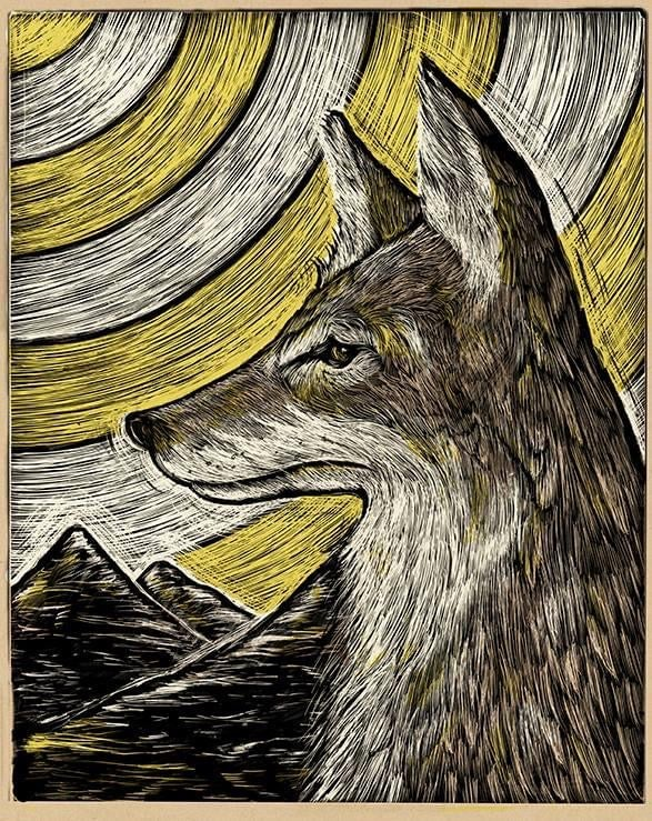 Coyote At Noon