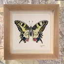 Image 3 of Small Framed Bug Prints