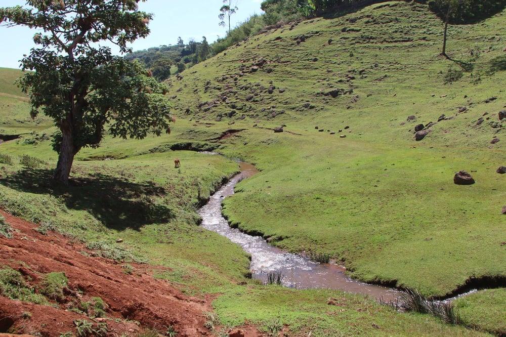Image of - ETHIOPIA - KAYON MOUNTAIN [Certified Organic]