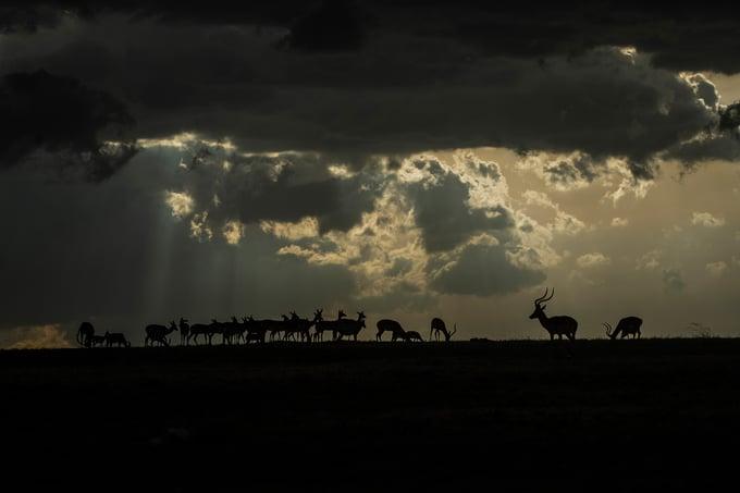 Image of Fotografía: rayos celestiales