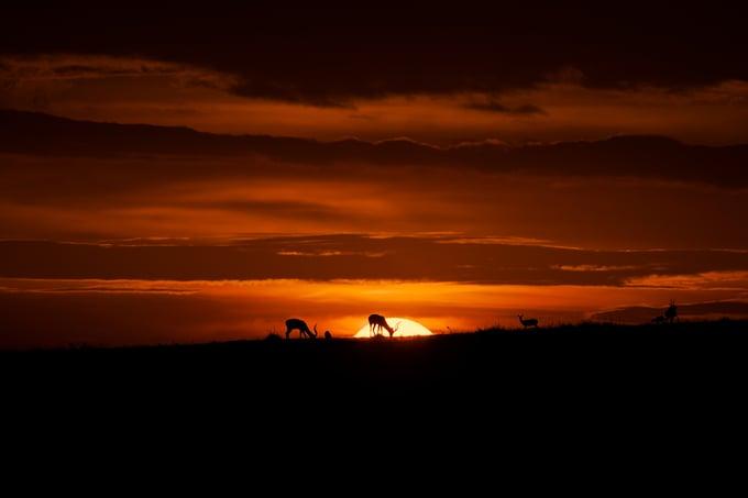 Image of Fotografía: la luz más importante del día