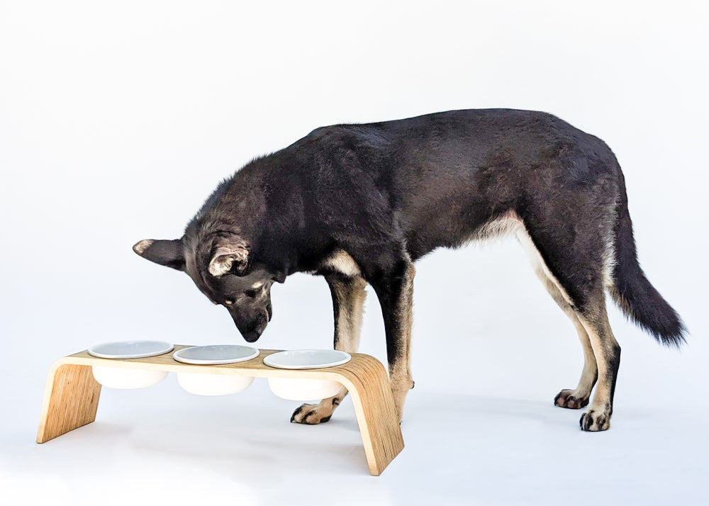 Image of Modern Dog Feeder, Raised / Elevated 3 bowls