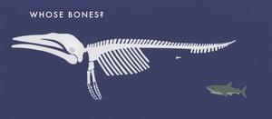 Image of Whose Bones
