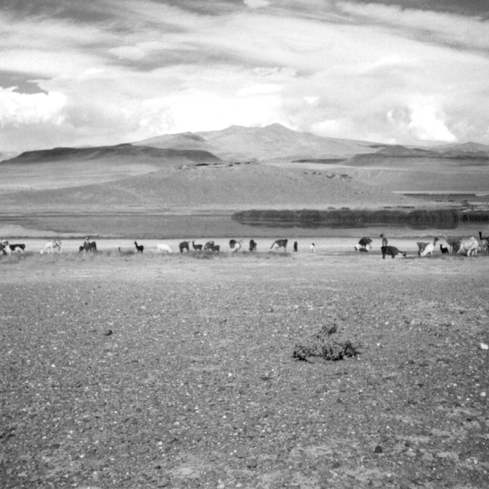 Image of Anla Courtis - Antofagasta