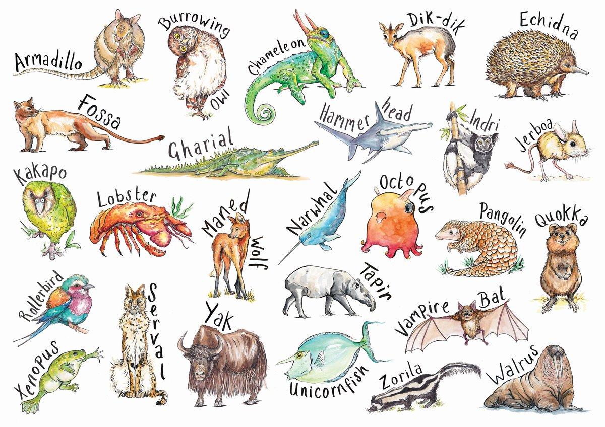 A-Z Extraordinary Animals
