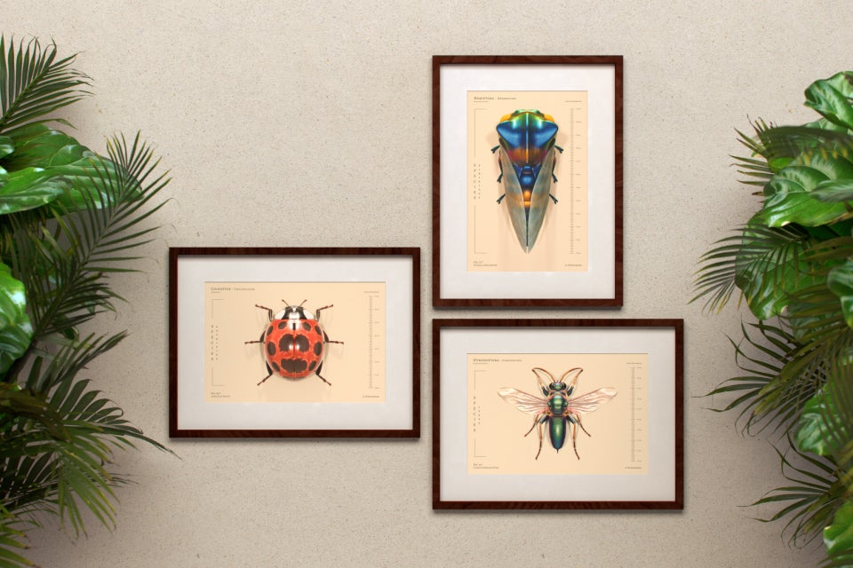 Image of Insecta Vol.1 (3 Prints , 25% Off)