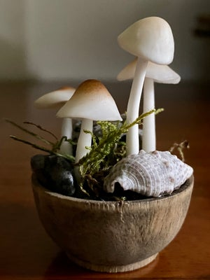 Image of Choose Your Snail Bowl - #2