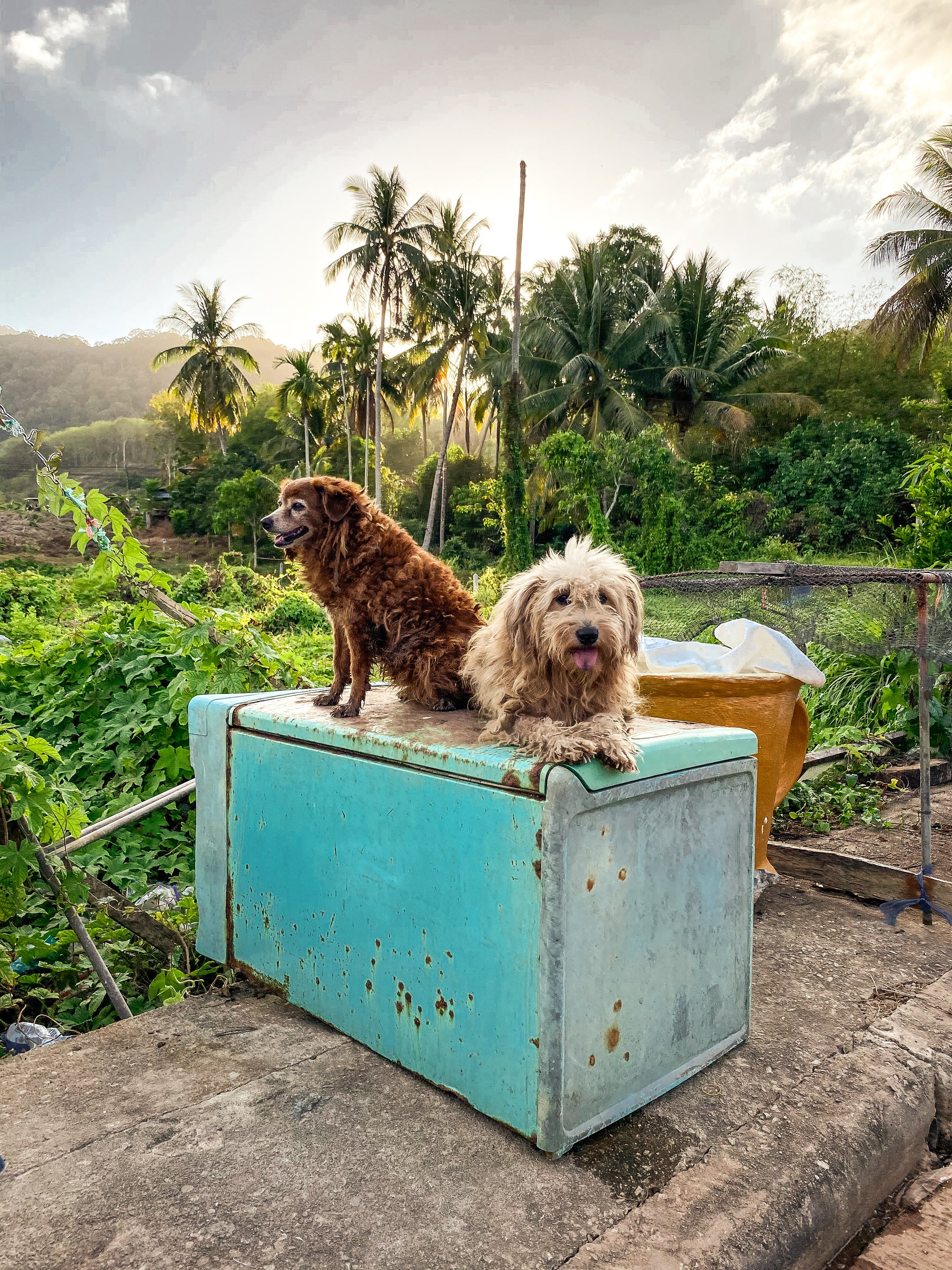 Image of Cools Dogs of Koh Lanta