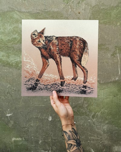 Image of Maned Wolf  in Colour